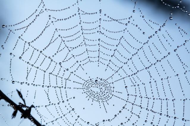pavučina v přírodě