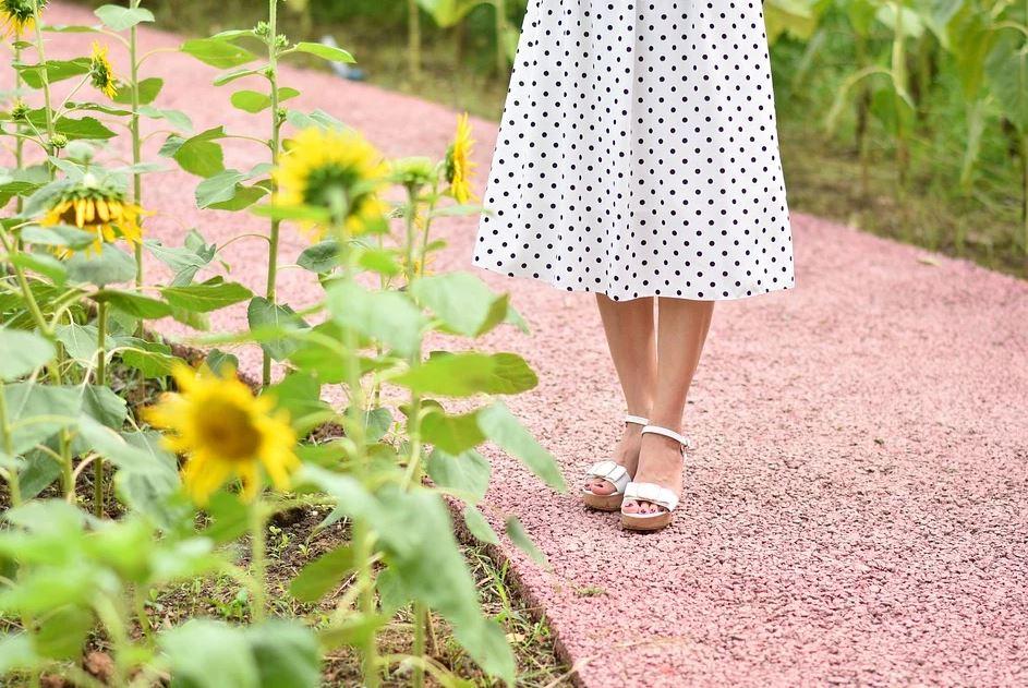 slunečnice na zahradě