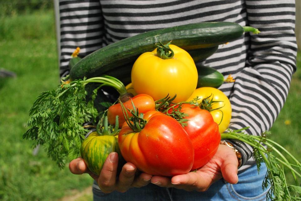 zelenina ze zahrady